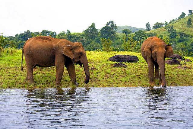 Thekkady Periyar wildlife sanctuary