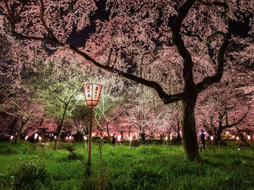 Cherry Blossoms Hookup Promo Code 2018