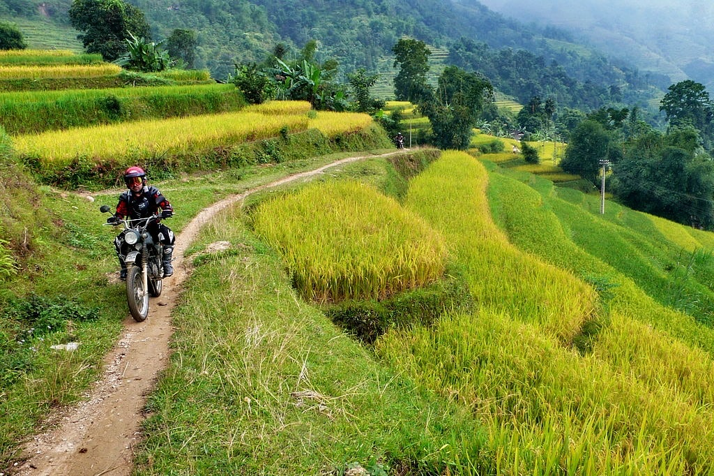 Traveller in Vietnam on a motorcycle amongst the rice fields