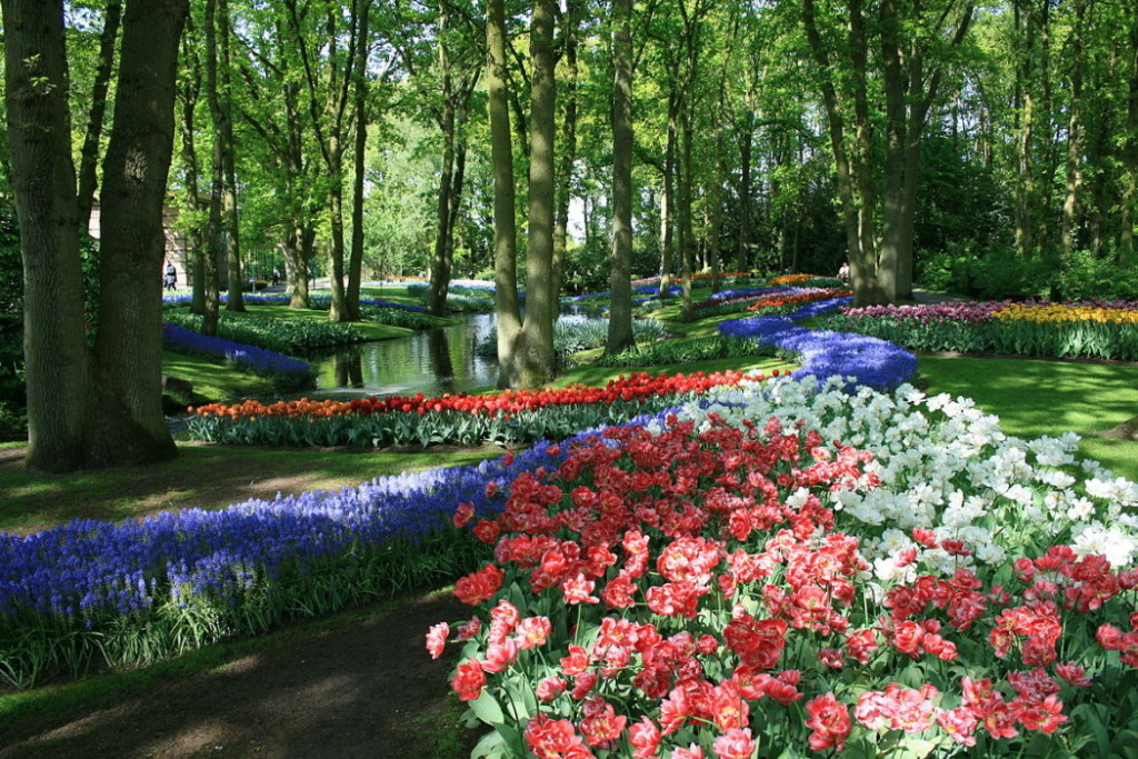 Keukenhof netherlands travel guide