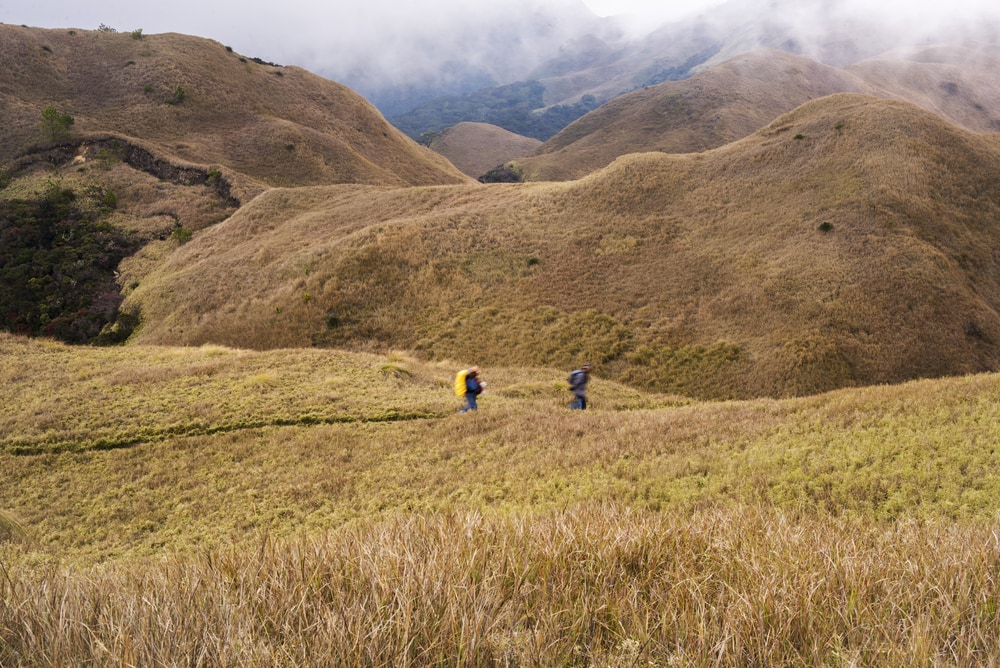 The Mt. Pulag trail