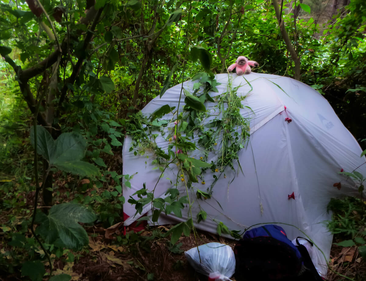 Freedom camping in New Zealand with an MSR tent