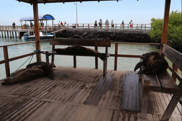 Galapagos budget travel guide