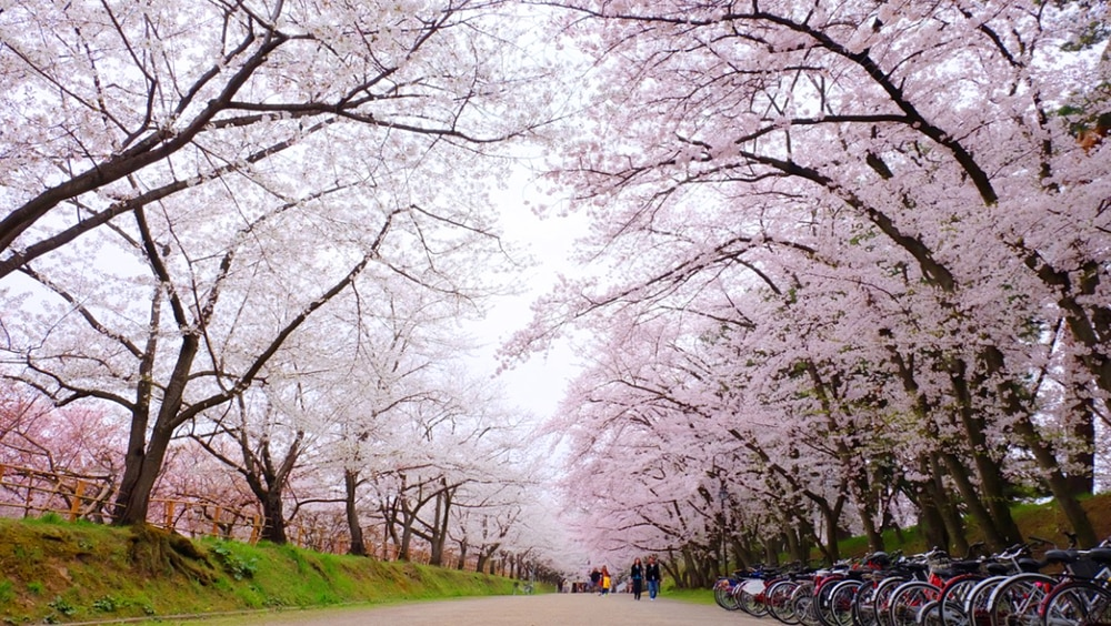 backpacking Japan budget travel guide