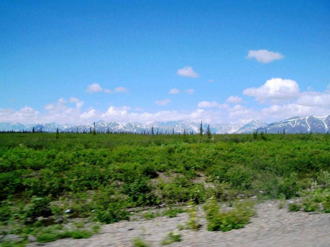 Alaska road trip-Taiga