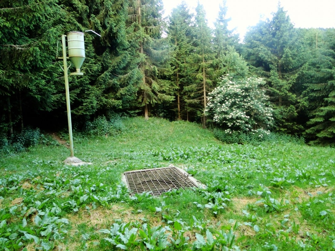A feeding station for bears in Slovenia