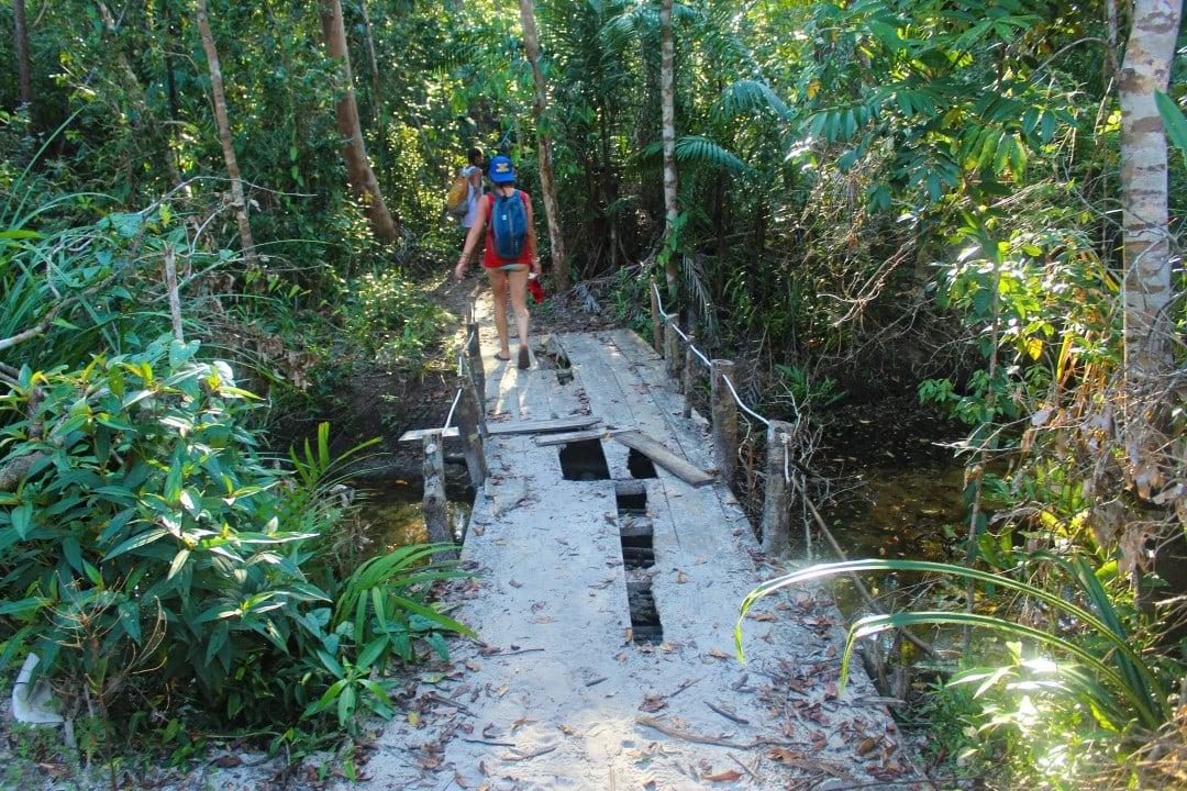 Jungle Cambodia Island Koh Rong Samloem