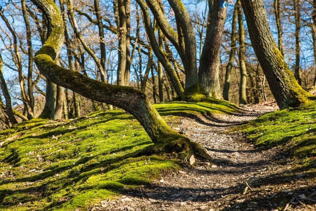 endless forest Slovenia