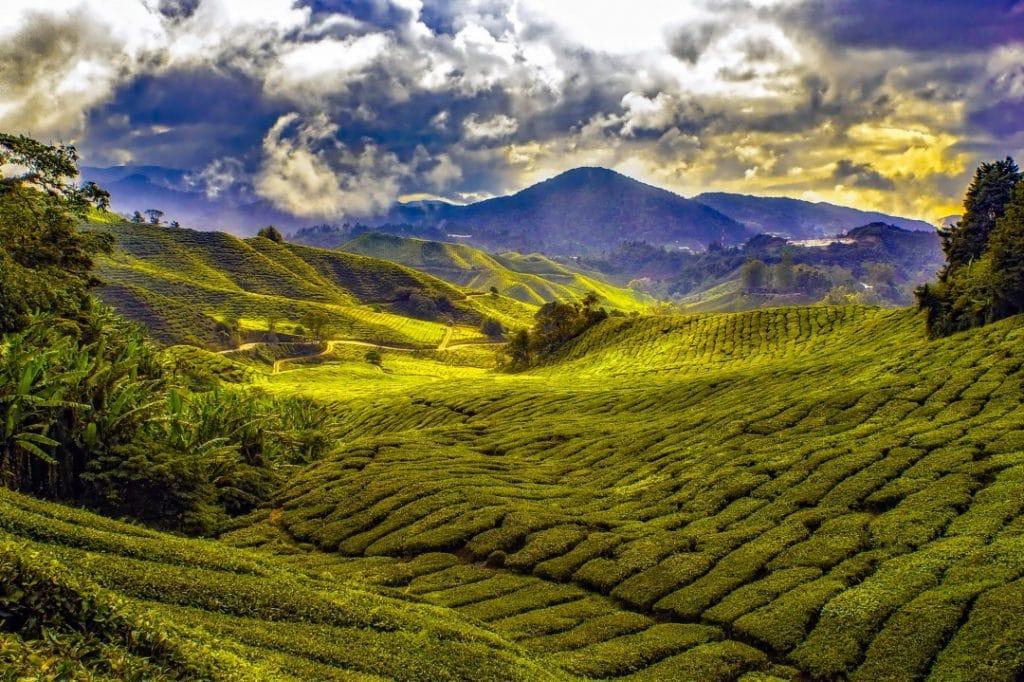 Why visit Malaysia? Malaysian tea plantation.