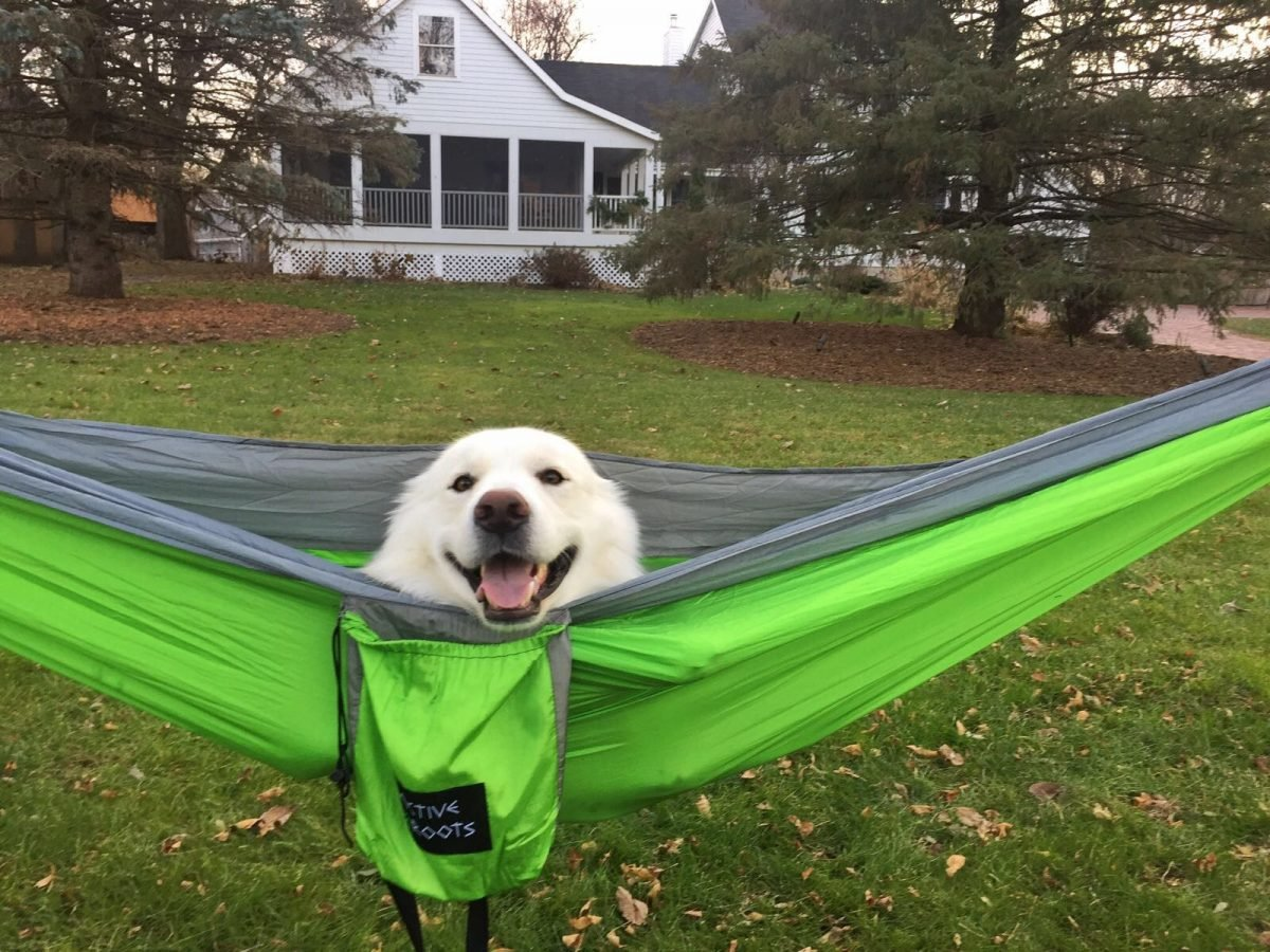 Active Roots Backpacking Hammock and a dog inside