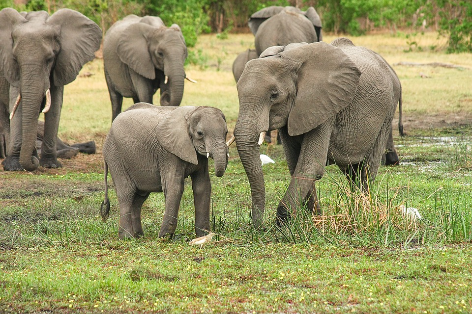 Support the elephants