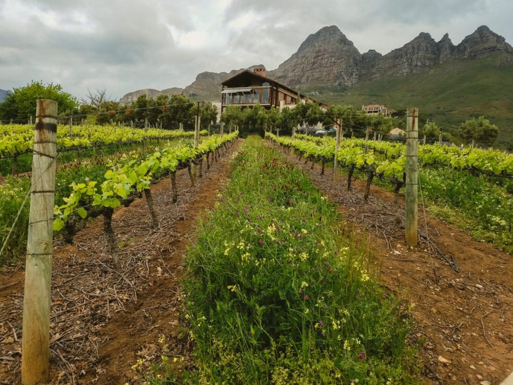 visiting winelands south africa