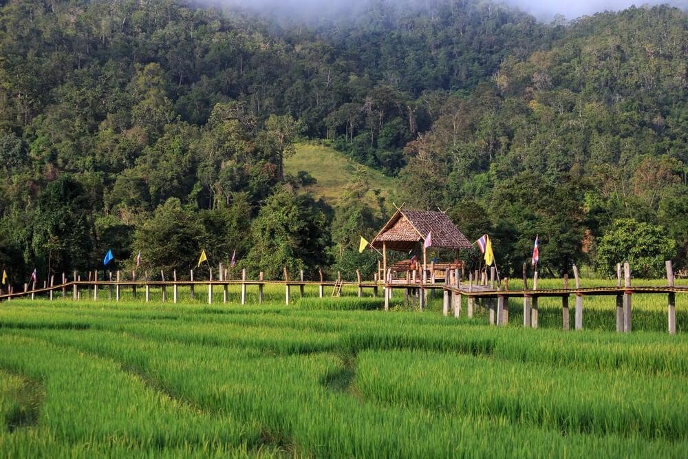 Bamboo Bridges, Pai