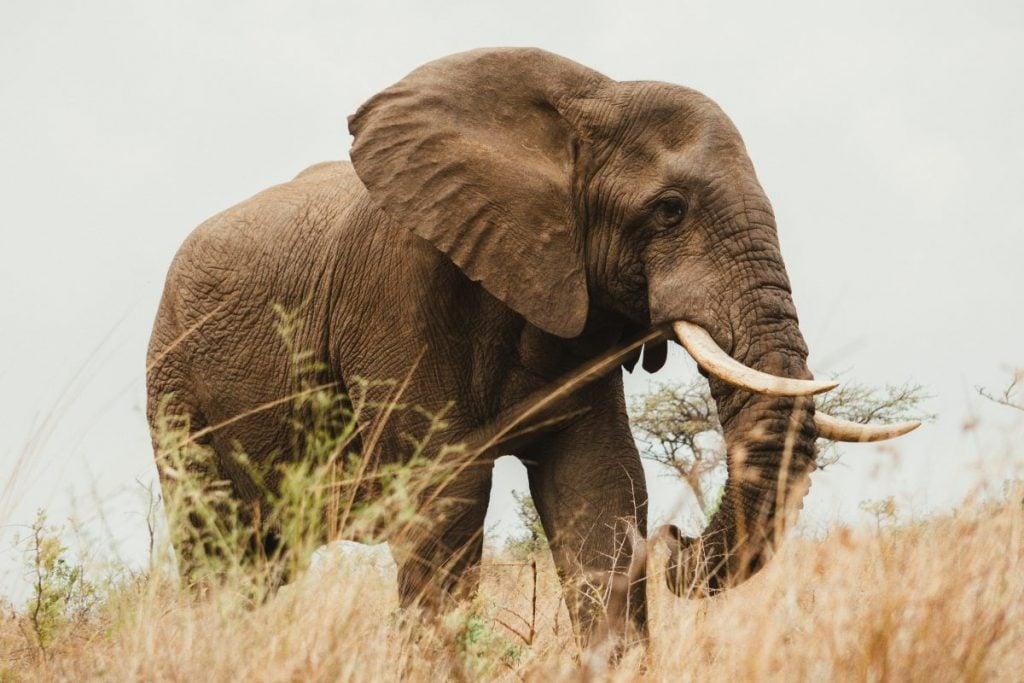 wildlife in KZN, South Africa