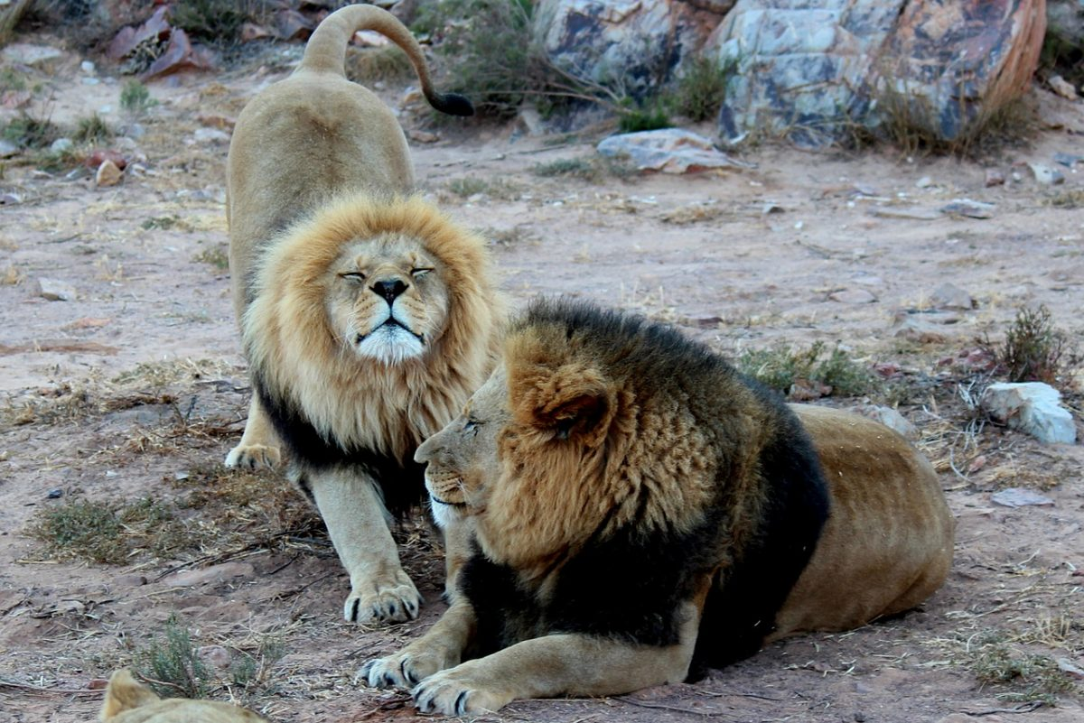 where to see south africa wildlife
