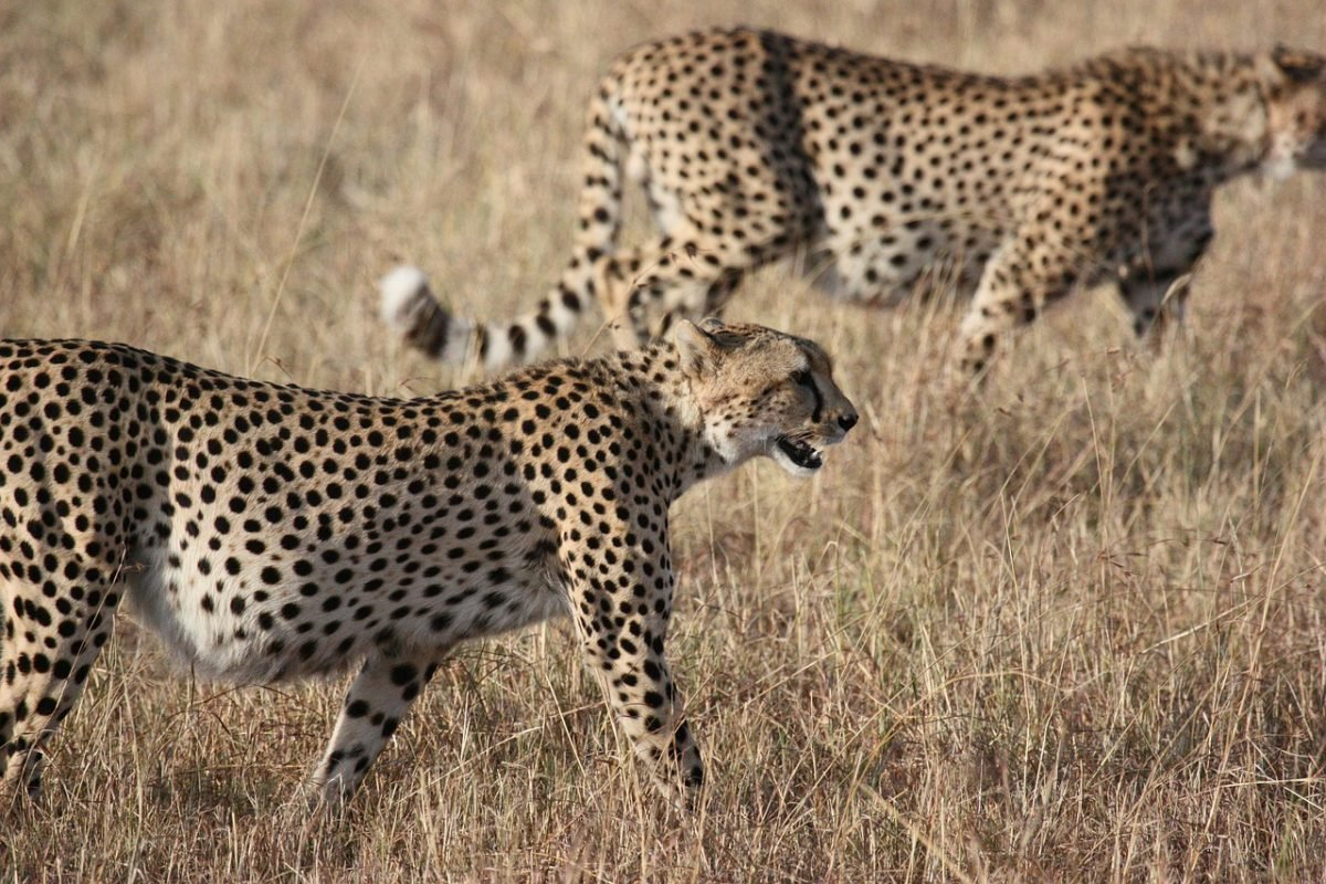 visit south africa to spot African wildlife