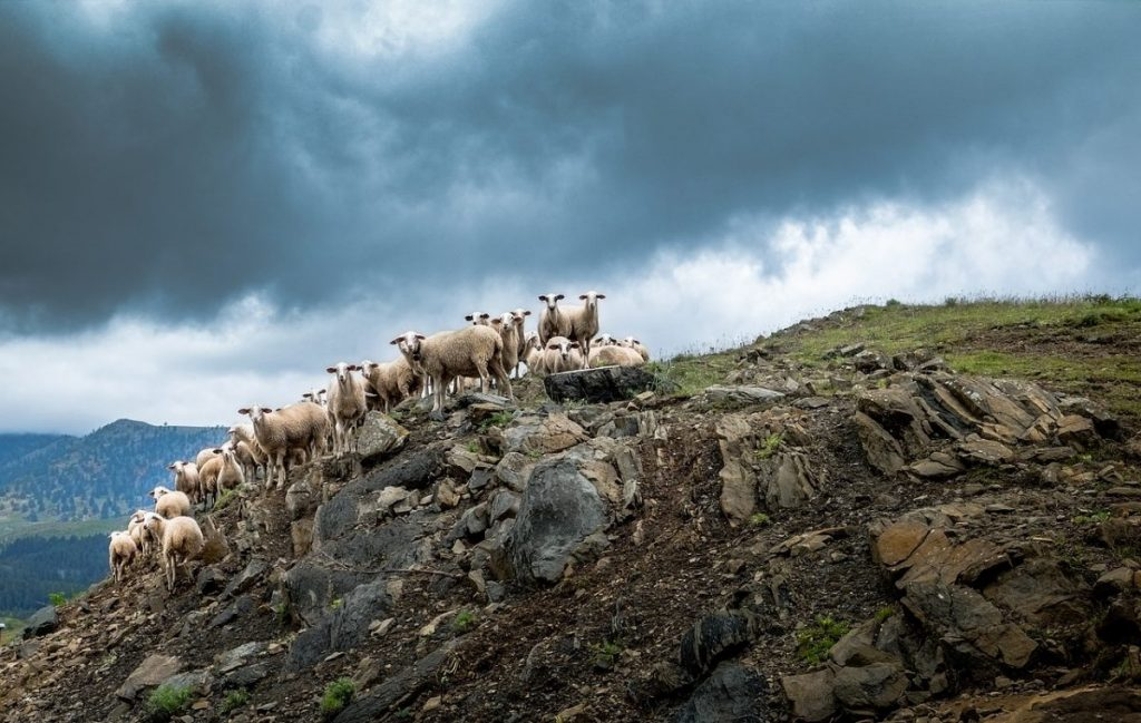 Goats on a mountain during stormy weather in Greece