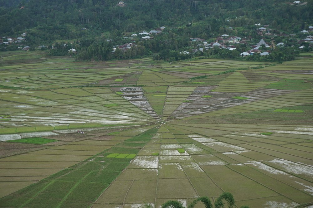 Spider web rice fields in Flores.