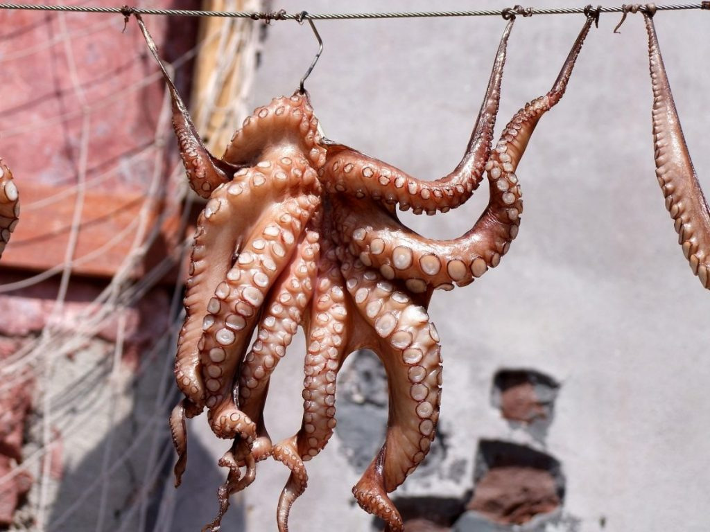 An octopus hanging up in a seafood market in Greece