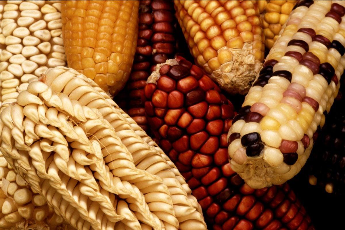 Corn festival ecuador
