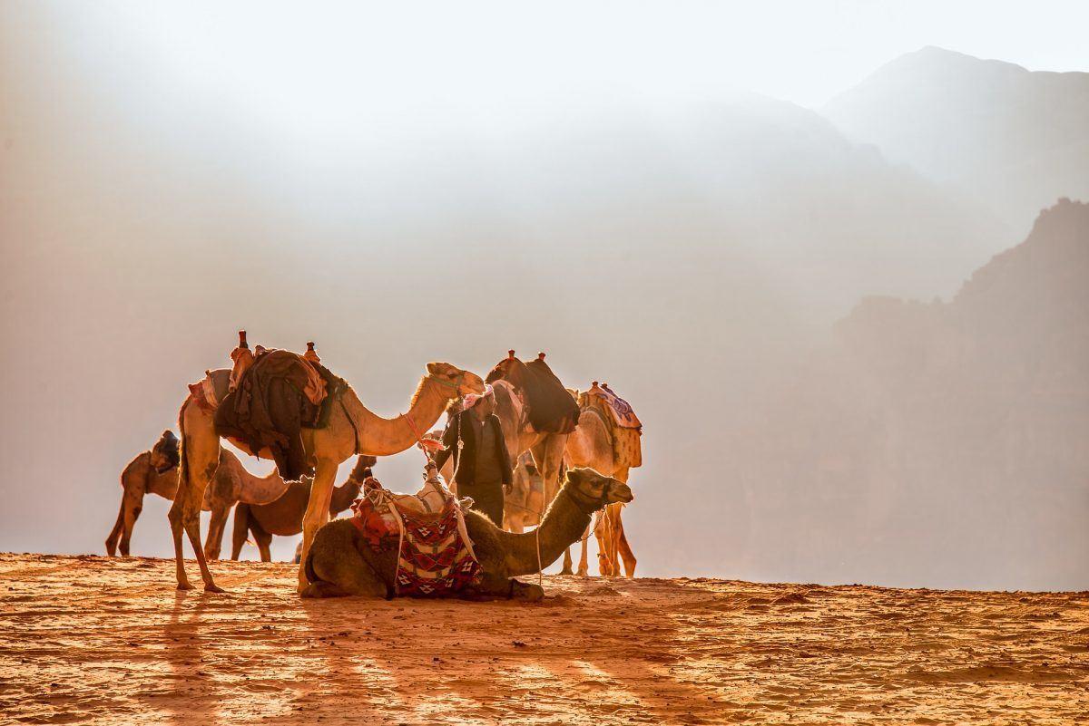Traveling Jordan by camel