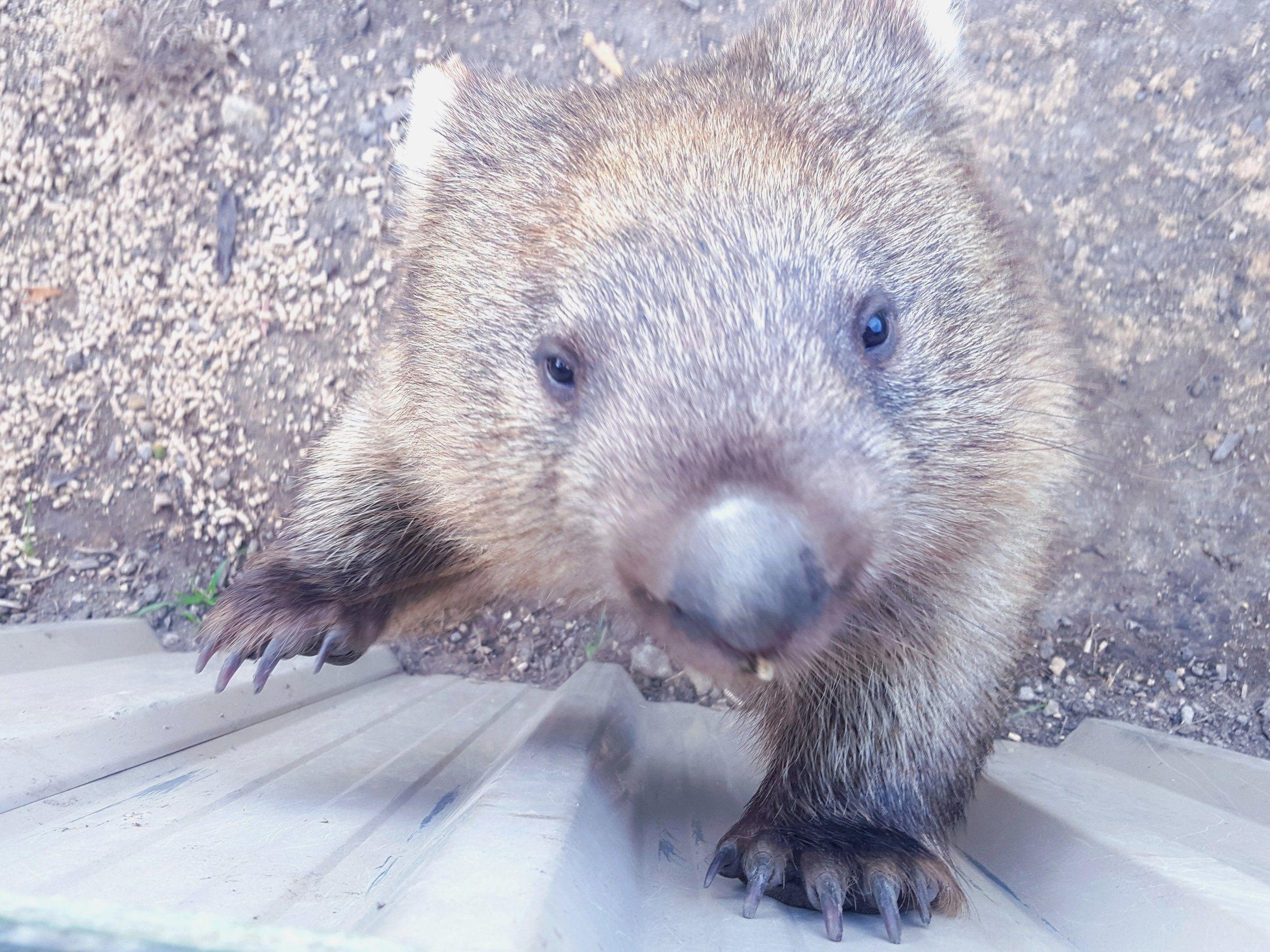 Staying Safe in Tasmania