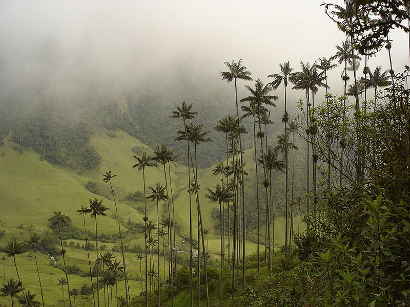 hiking in Cocora valley colombia