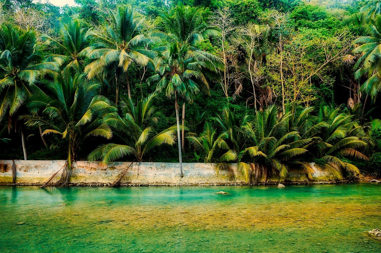 River and Palm Trees in the Philippines