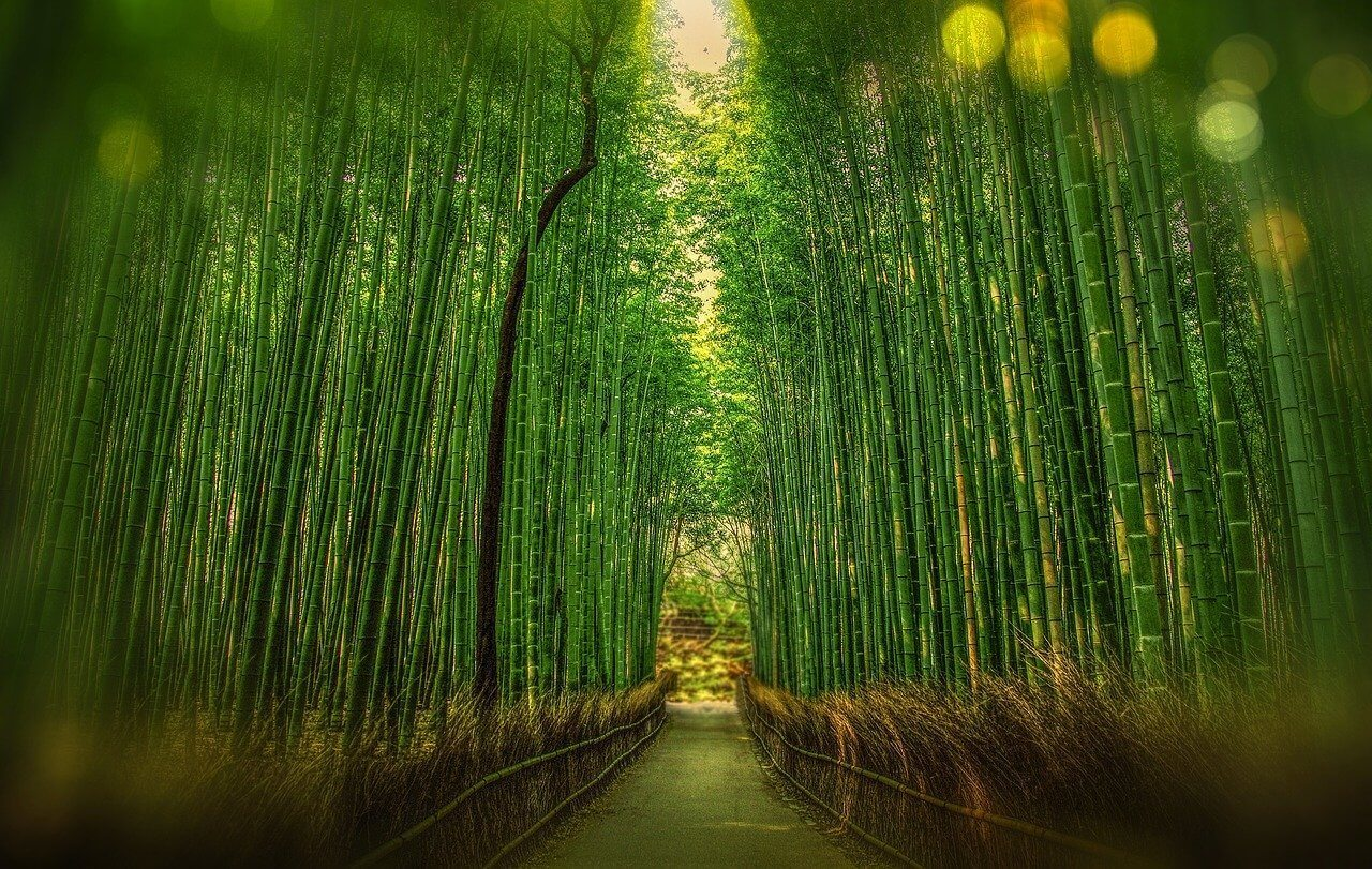 A famous bamboo forest tourist attraction in Japan