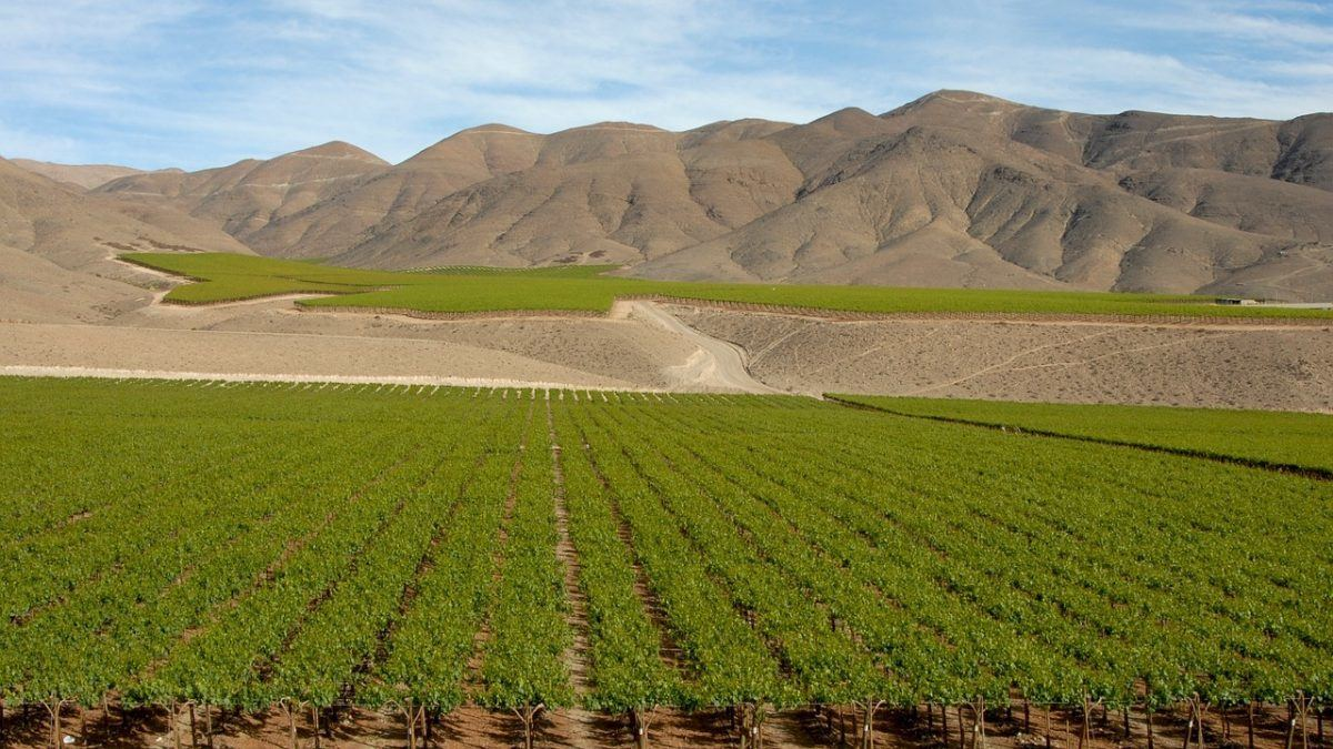visit a Chile winery