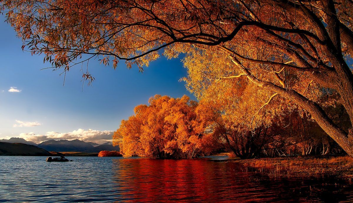 Lake Tekapo, New Zealand, in autumn - the best time to visit for pretty trees