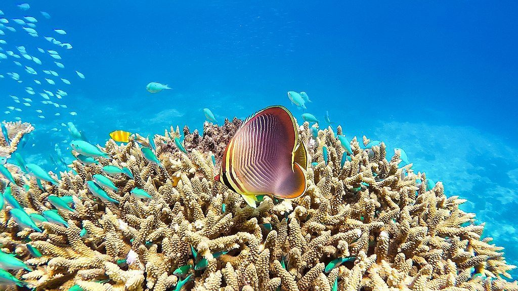 fish in the great barrier reef australia