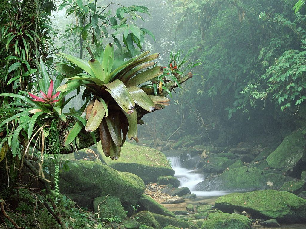 The greens of travelling Malaysia in monsoon season