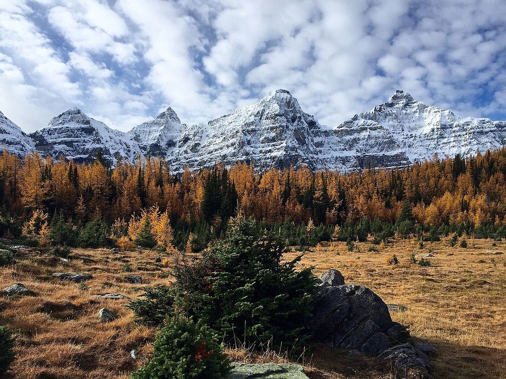 larch valley in banff national park canada
