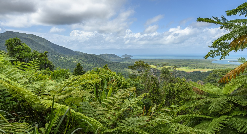 The Daintree Forest