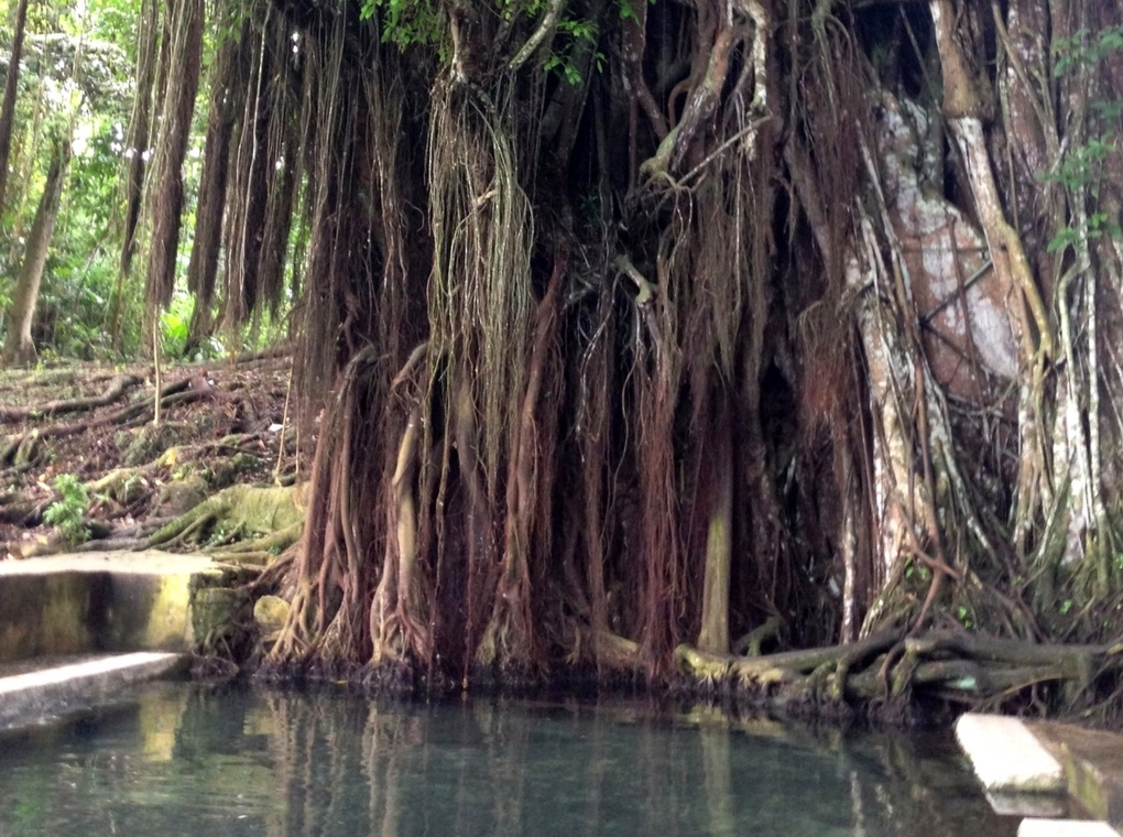 Balete tree - one of Siquijor's tourist spots