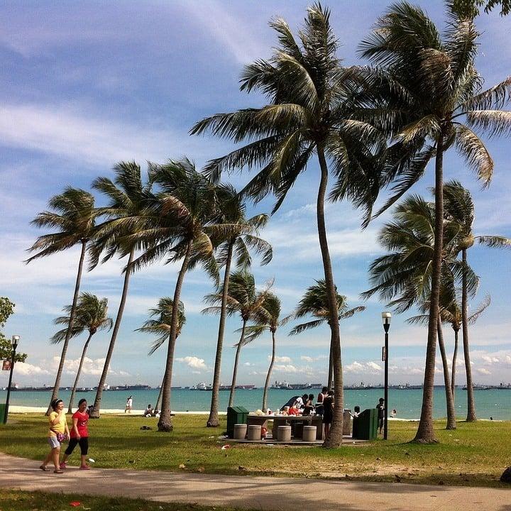 Singapore Breeze Palms Sky Coastal