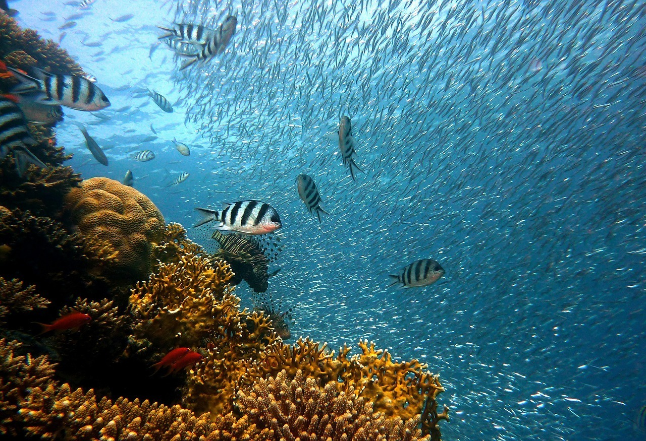 Diving in reef on a diving holiday in Rodrigues, Mauritius