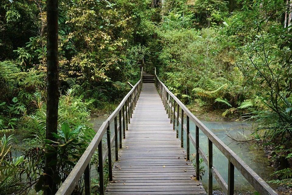 singapore-rainforest