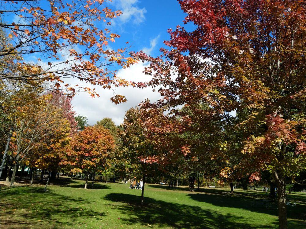 Toronto West Queen West Trinity Bellwoods Park