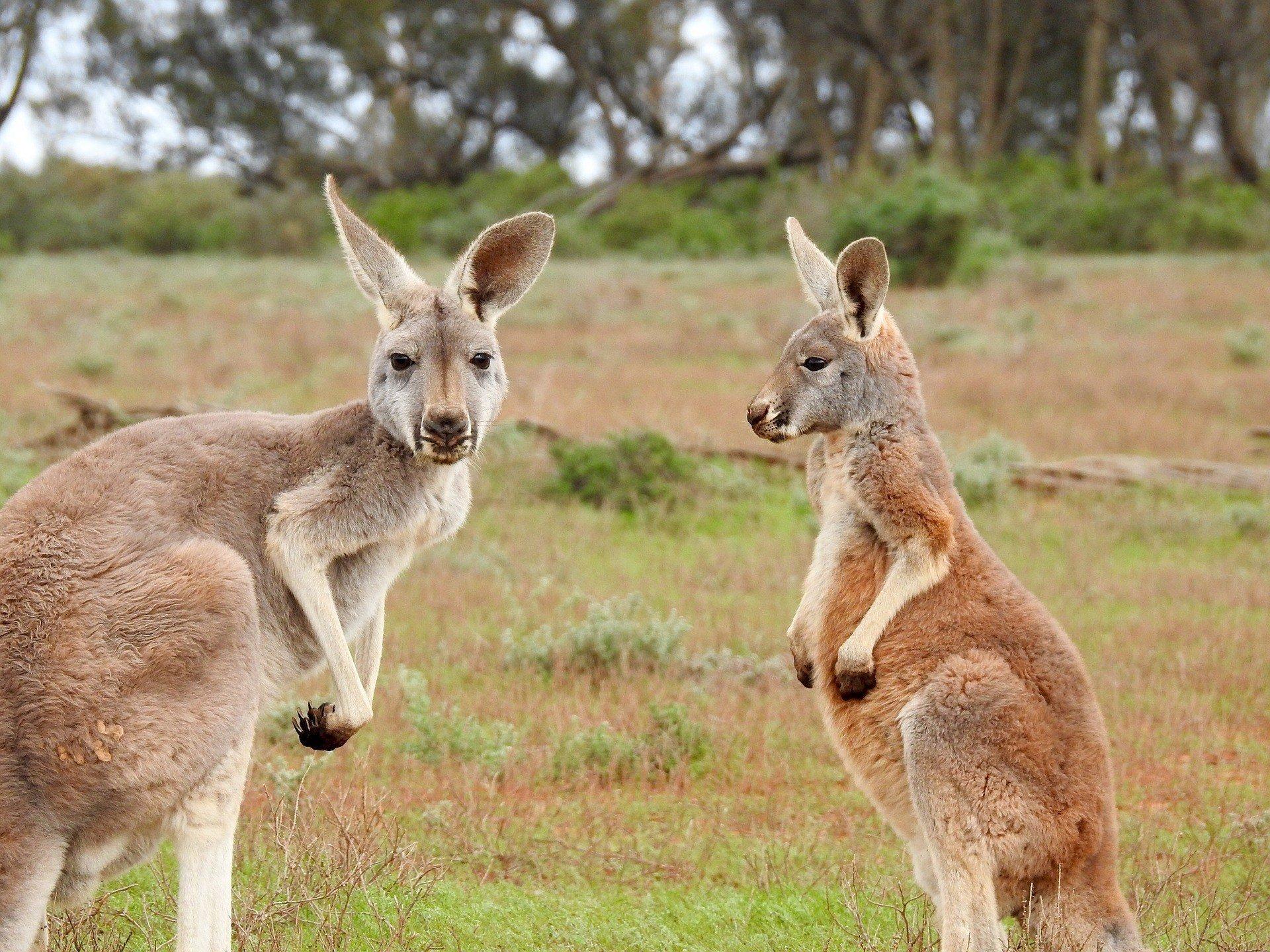 Best Hostels in Australia