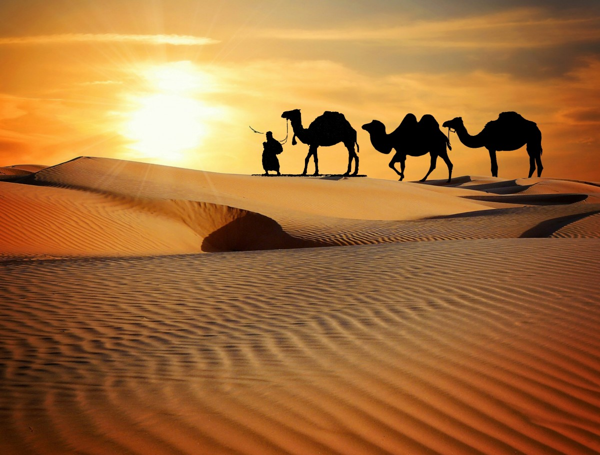 Man covered by the best travel insurance camel trekking