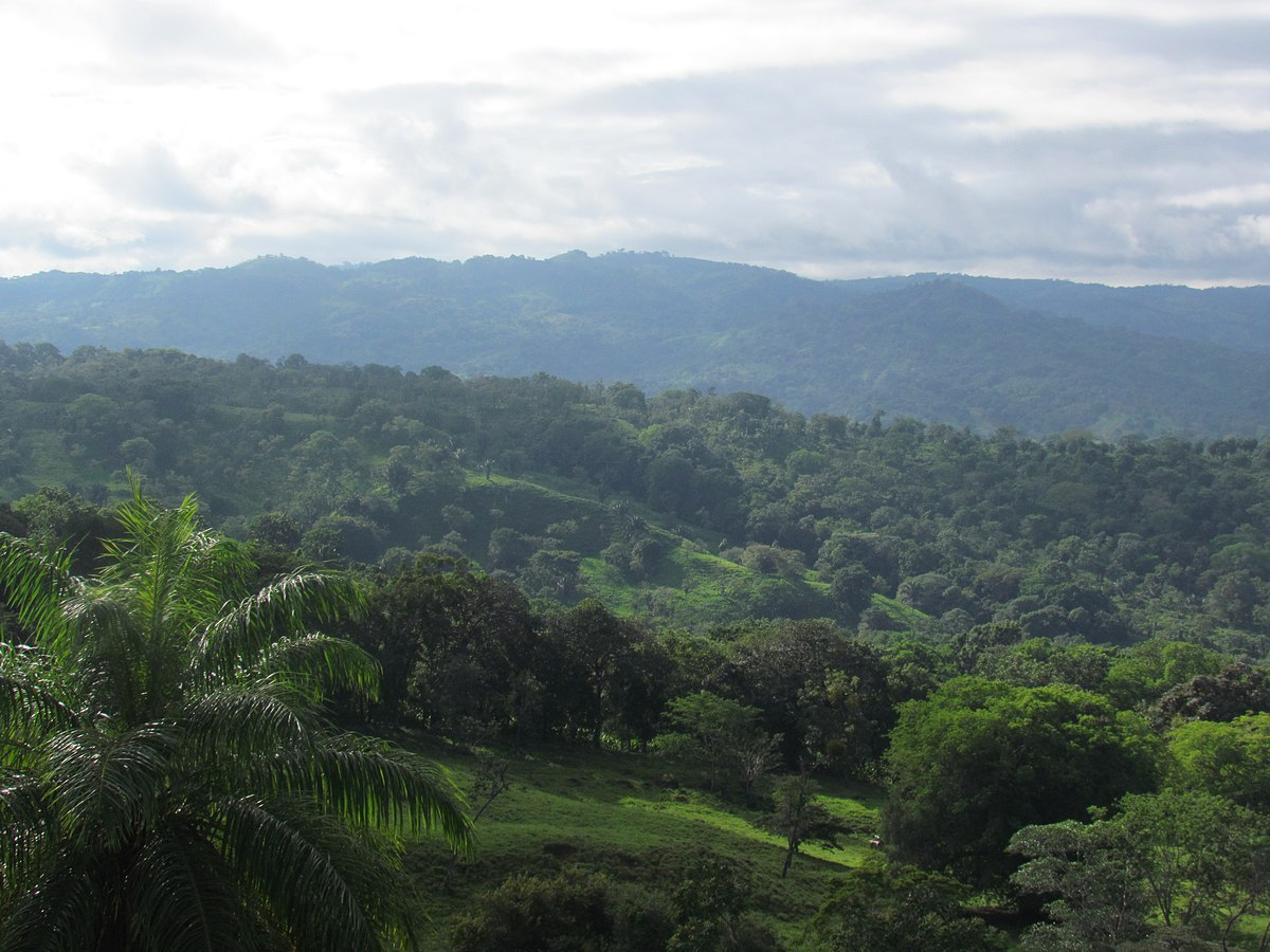 jungles of panama