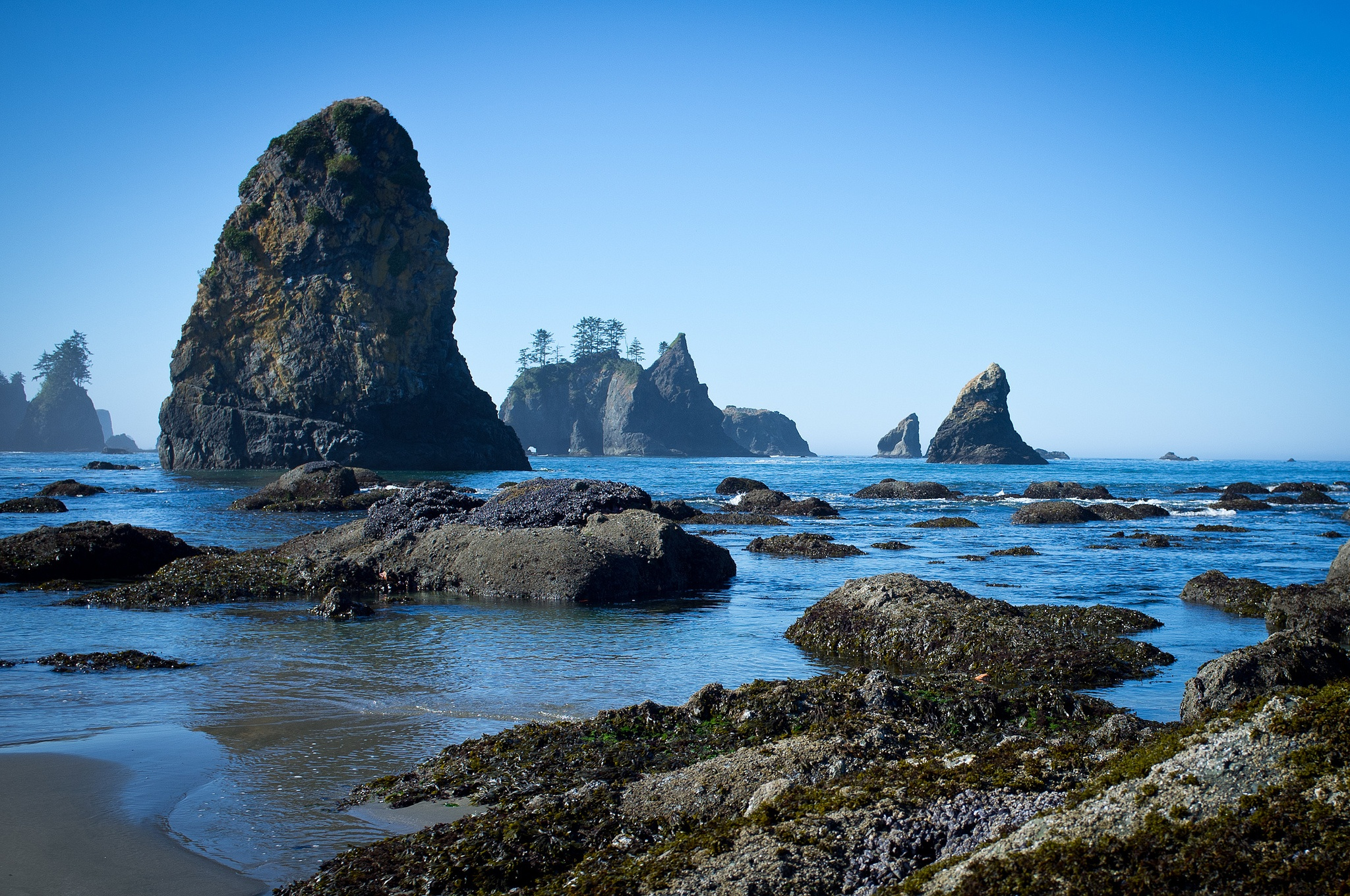 While not tropical, Washington has some really nice beaches - shi shi beach olympic peninsula washington road trip