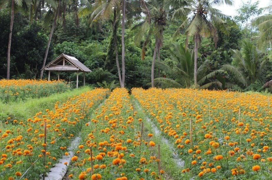 Flower fun at Desa Temukus