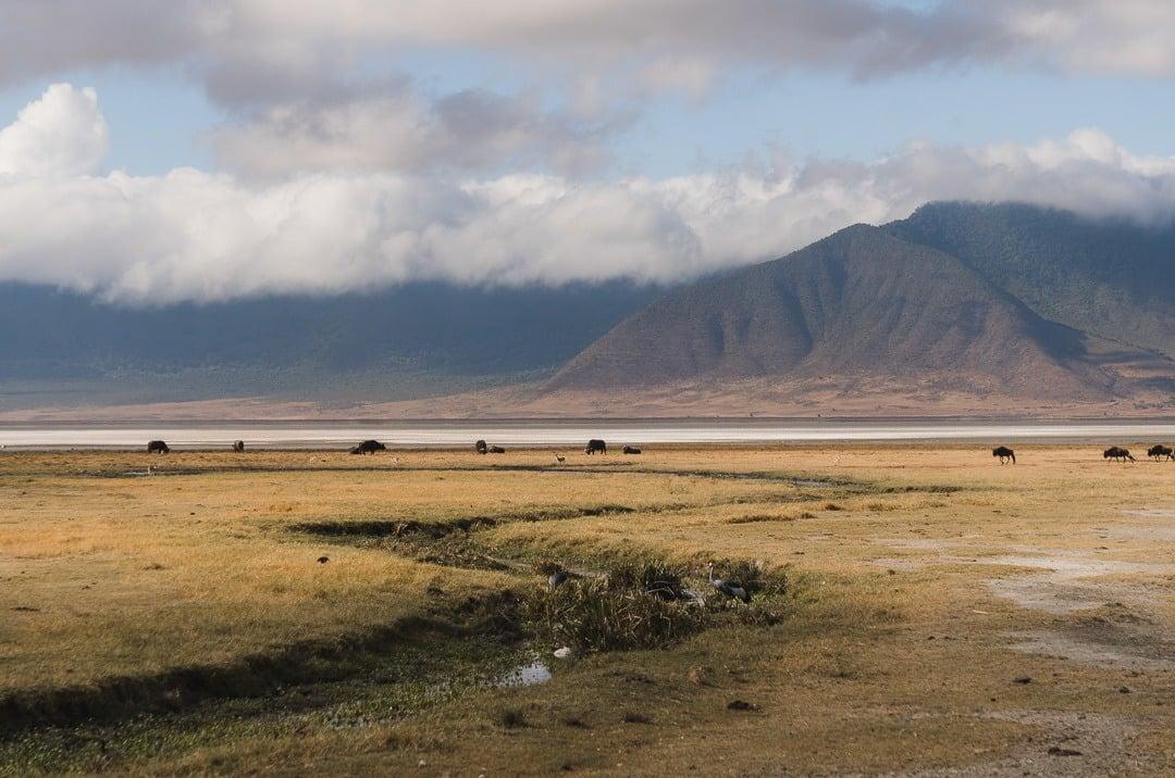 Ngorongoro: best safari in tanzania