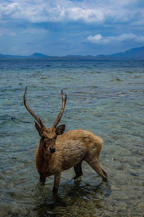 Deer Island, Bali