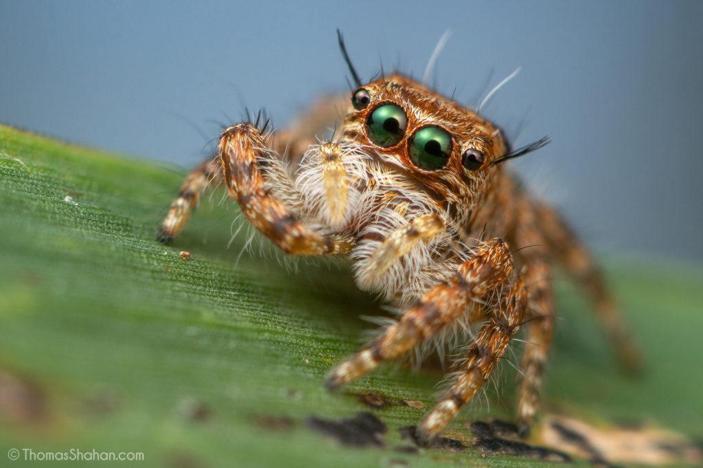 baby spider in gorongosa