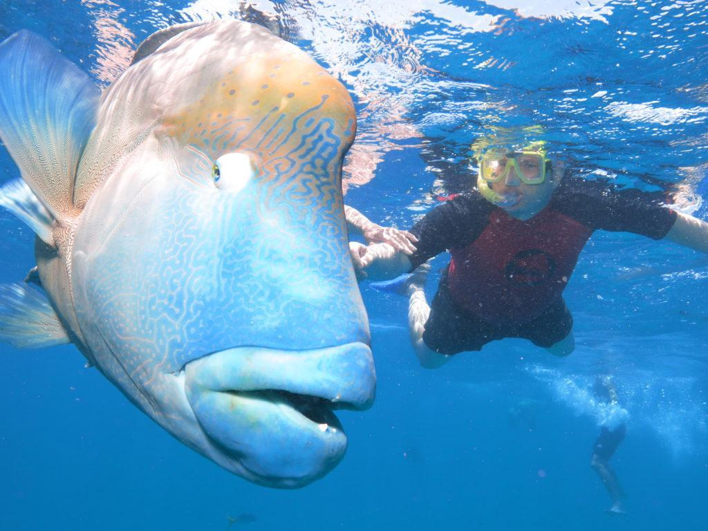diving with a grouper backpacking cairns