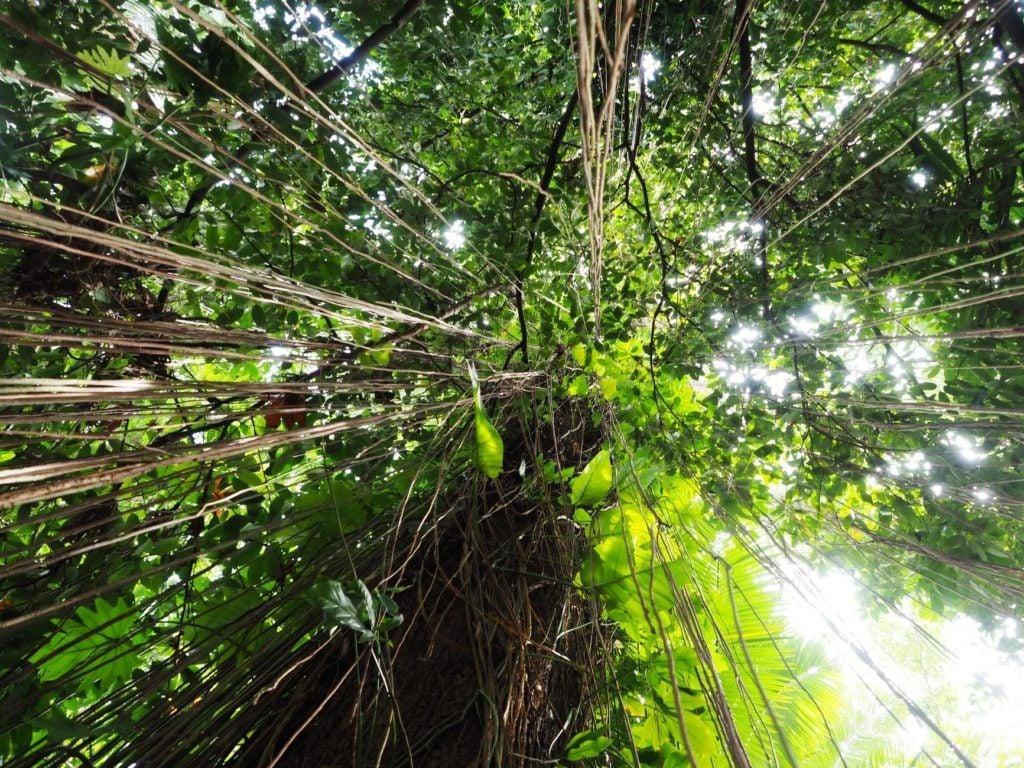 daintree rainforest backpacking cairns
